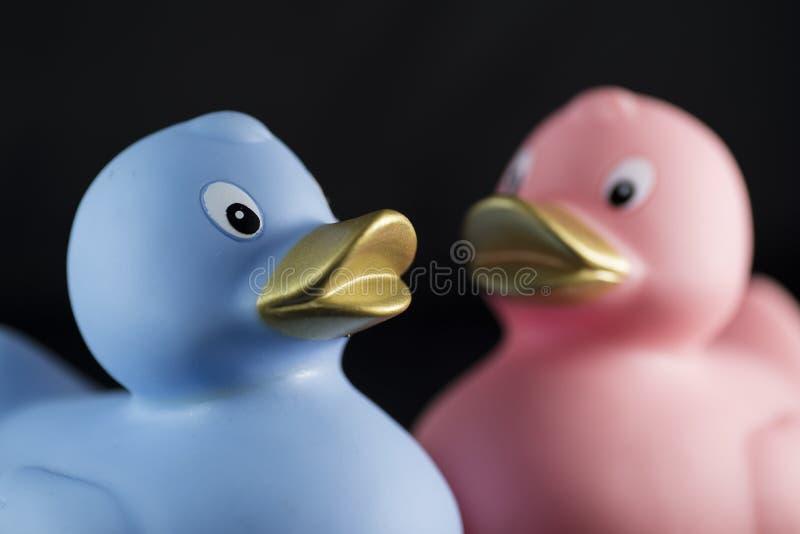 在性别颜色的鸭子 免版税库存图片