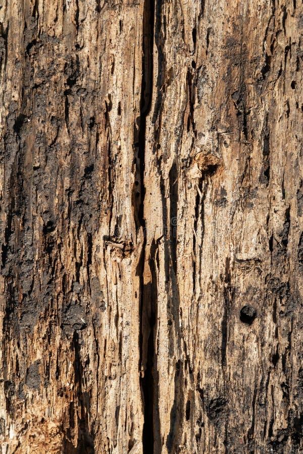 在恶劣的情况的年迈的破裂的木表面纹理 库存照片