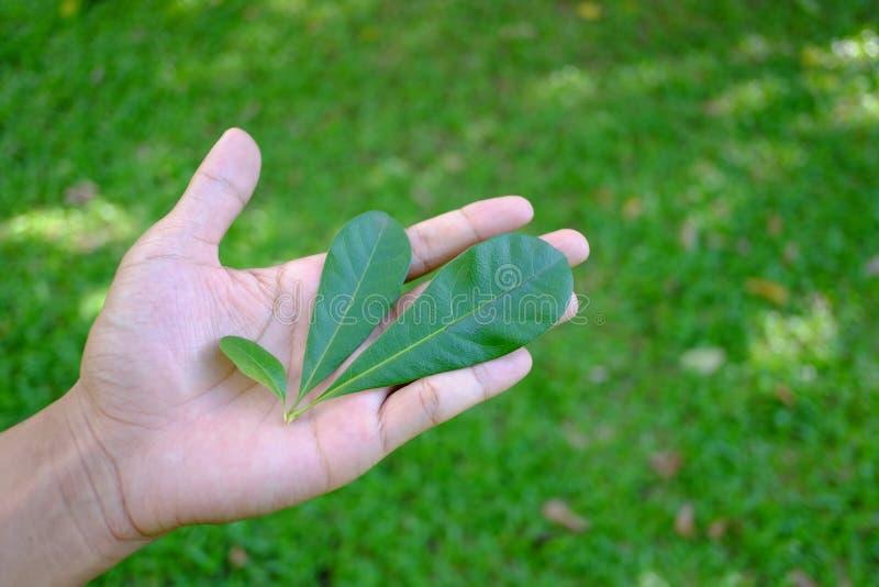 在您的手,救球世界救球生活上的一片美丽的叶子 免版税库存照片
