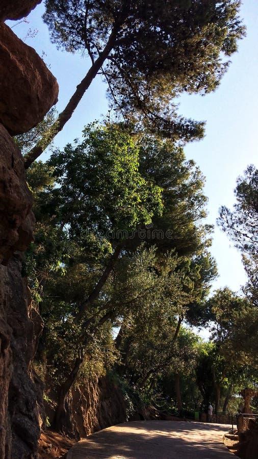 在悬崖的树 免版税库存图片