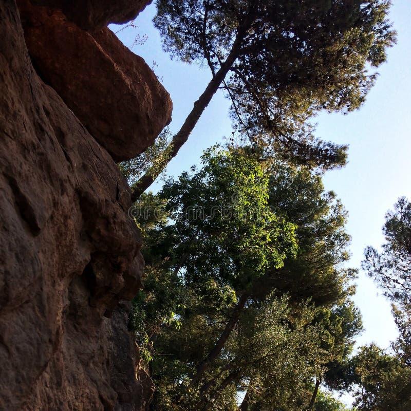 在悬崖的树 库存图片