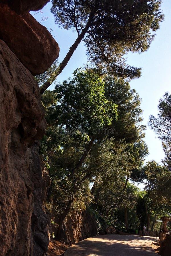 在悬崖的树 免版税库存照片