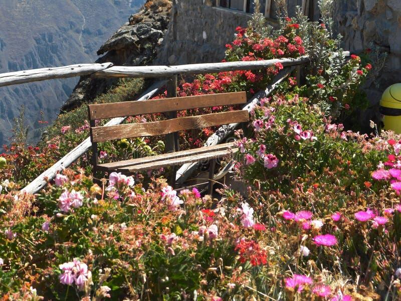 在悬崖边缘的美丽的花 免版税库存照片