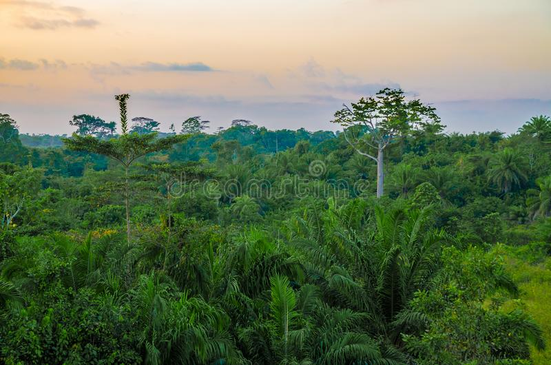 在惊人的日落期间的美丽的豪华的绿色西非雨林,利比里亚,西非 免版税库存图片