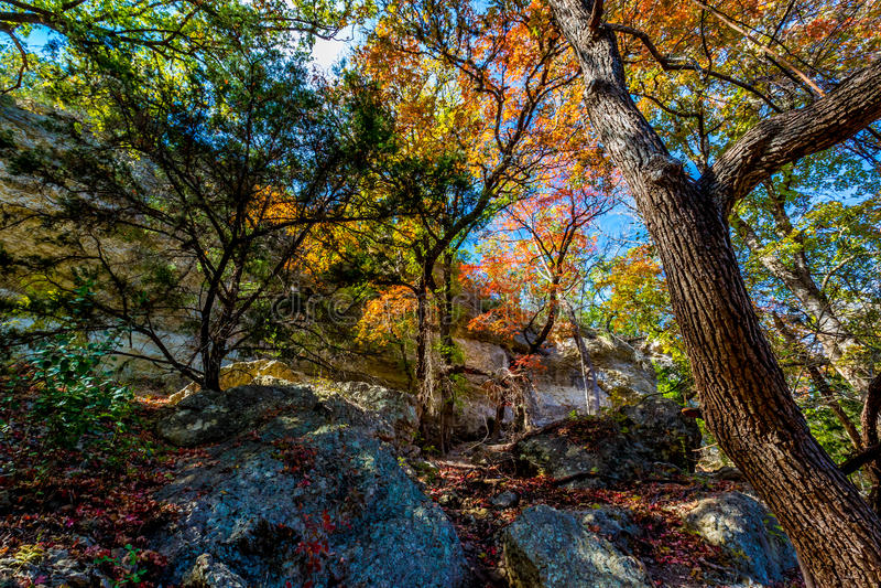 在惊人的槭树的明亮的美丽的秋叶在得克萨斯 免版税图库摄影