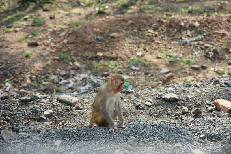 在想法的猴子 免版税库存照片