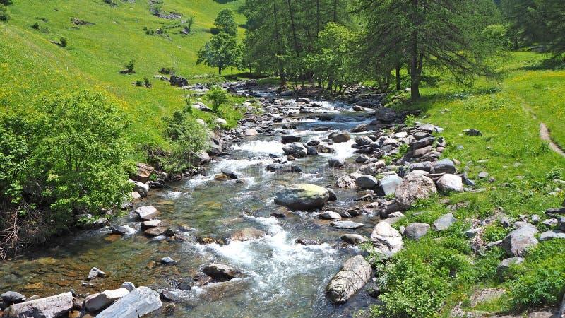 在意大利阿尔卑斯的小河 干净和原始水 免版税库存照片