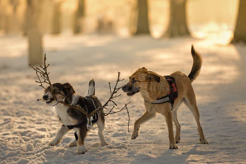 在戏剧的狗在雪 库存图片