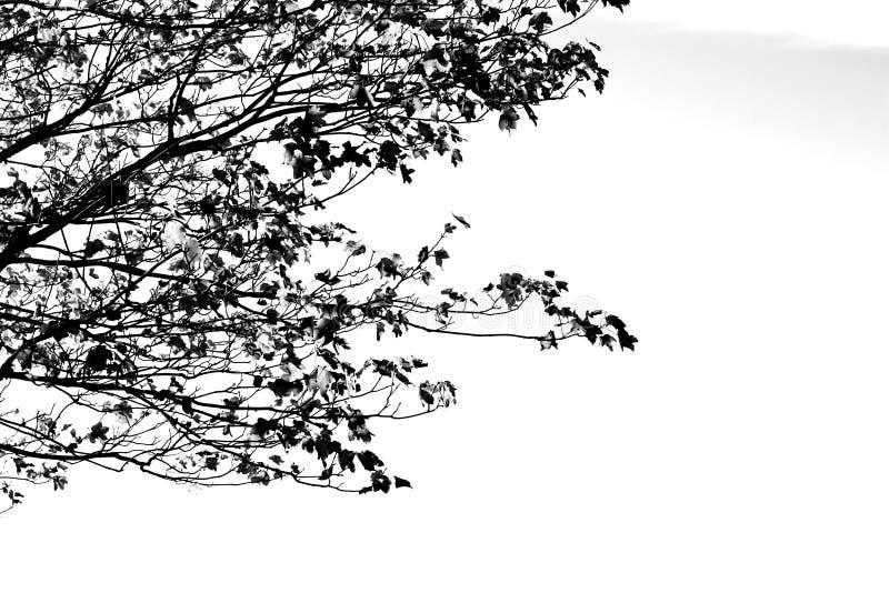 在我的头脑的Black&white 图库摄影