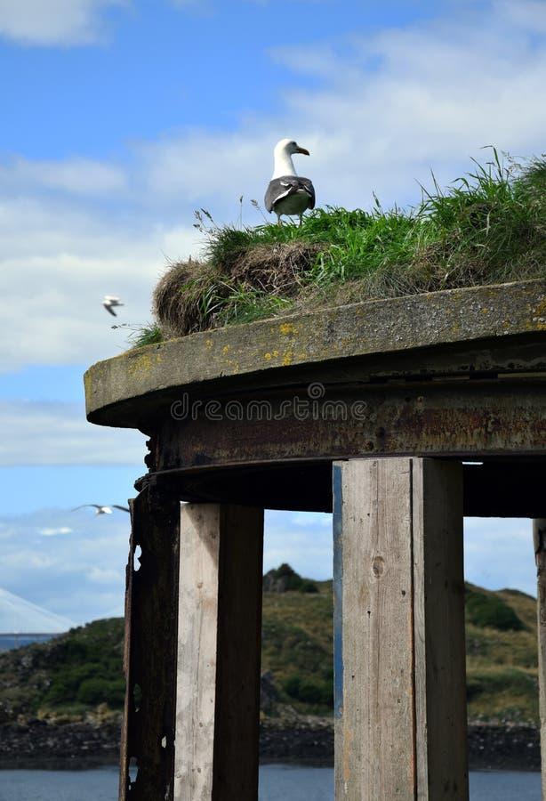 在战争设防的上面的海鸥 库存图片