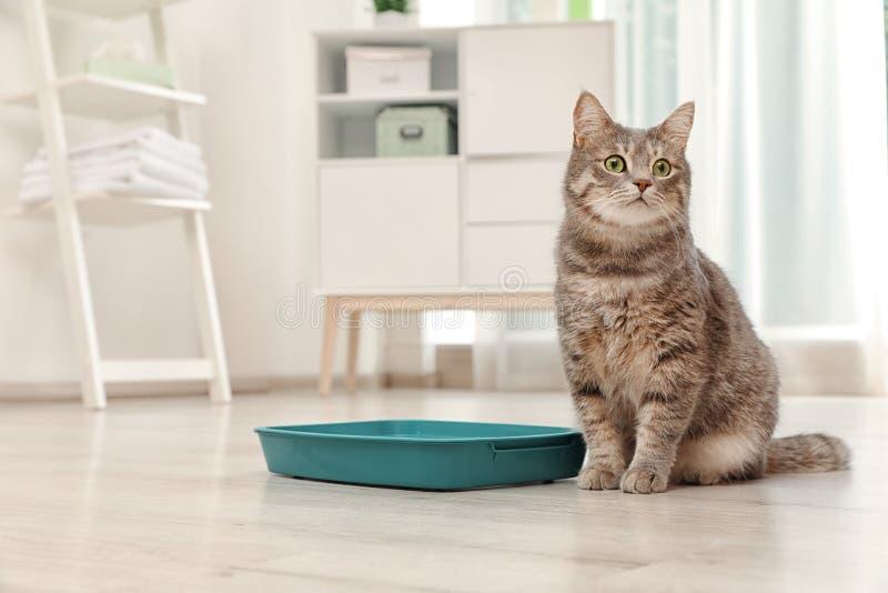 在户内垃圾箱附近的可爱的灰色猫 库存照片