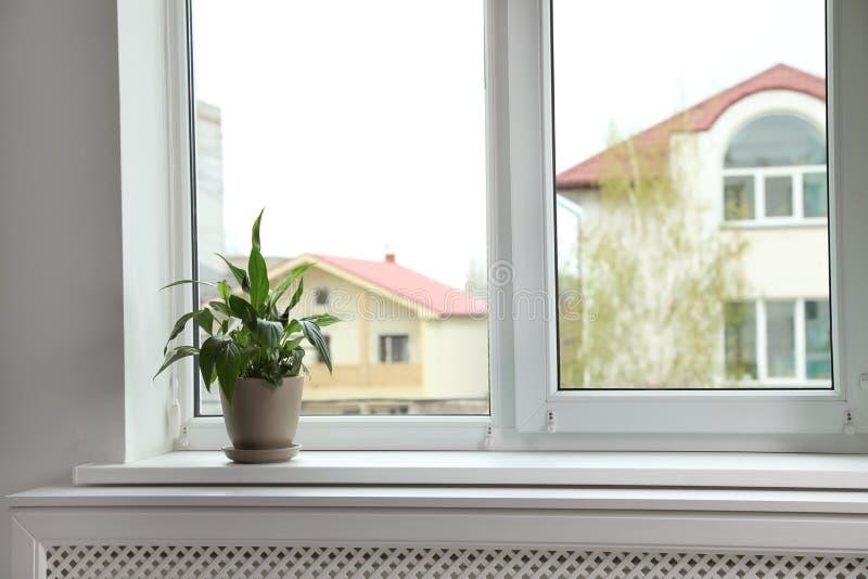 在户内窗口基石的美丽的和平百合 库存照片