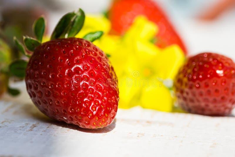 在户外白色木桌上的成熟五颜六色的草莓在庭院黄色春天开花,明亮的阳光 免版税库存照片