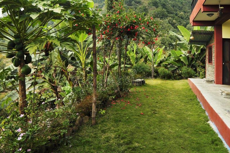 在房子在热带, s前面的甚而明亮的绿色草坪 免版税库存照片