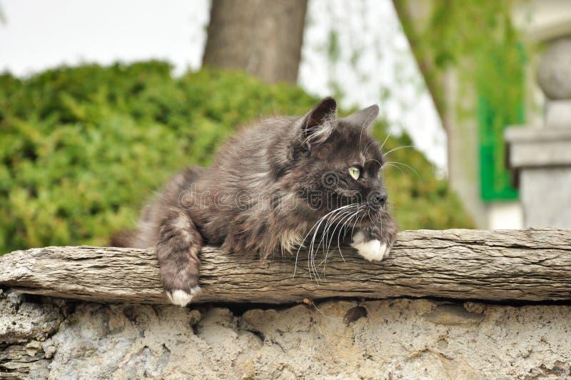 在房子墙壁上的猫  免版税库存照片