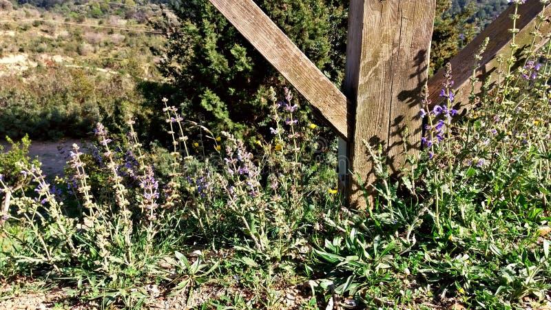 在房子的入口的淡紫色花 免版税库存图片