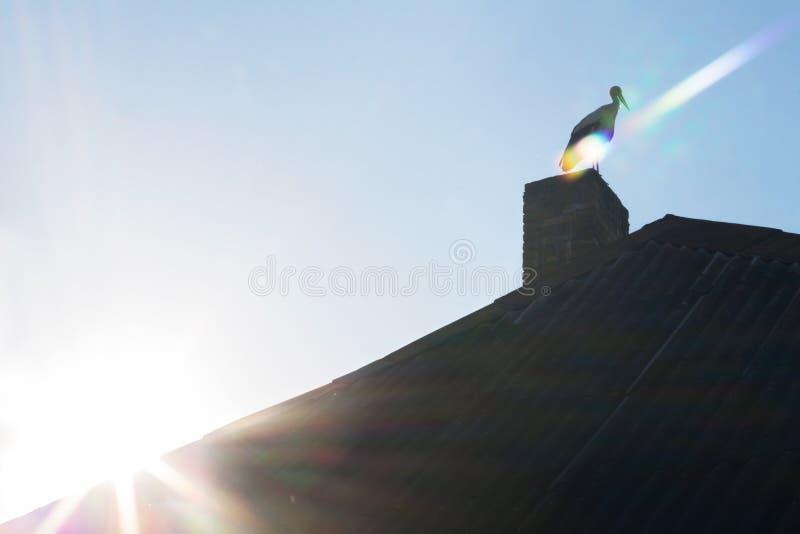 在房子的屋顶的鸟 自然 黎明 免版税图库摄影
