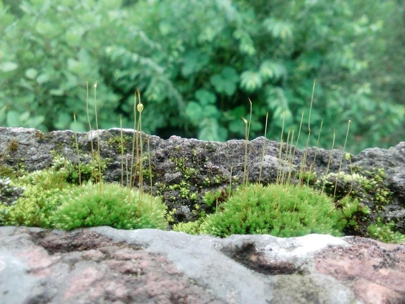 在房子的roos的自然草是 免版税库存照片