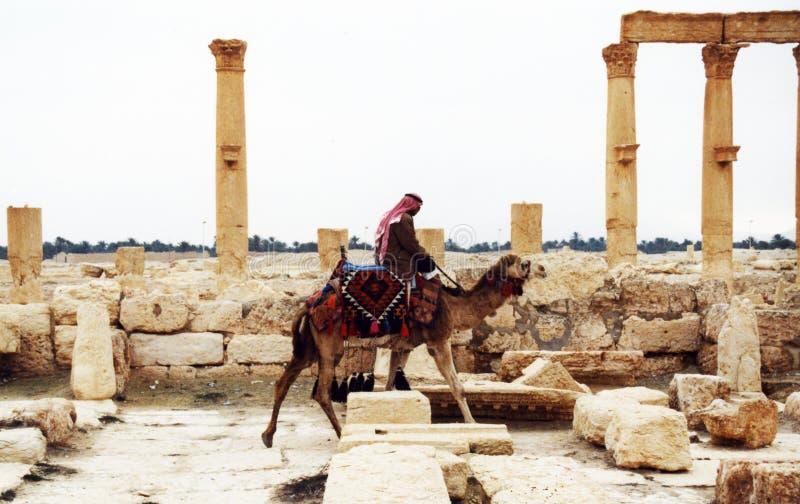 在扇叶树头榈的Beduin 免版税库存照片