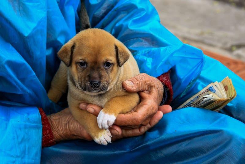 在手上的小狗 免版税库存照片