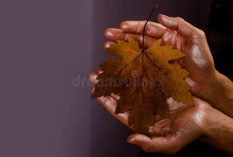 在手上的秋天叶子 你好秋天和叶子秋天梦想 黑星期五的秋天销售 r 库存图片