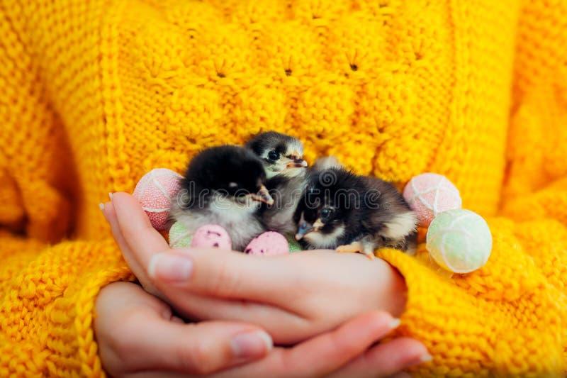 复活节鸡 在手中拿着三只黑小鸡的妇女围拢用复活节彩蛋 免版税库存照片