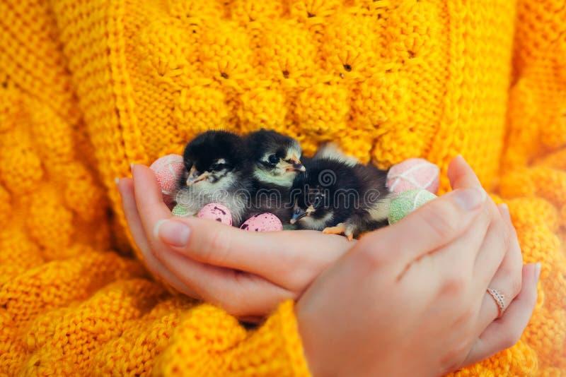 复活节鸡 在手中拿着三只黑小鸡的妇女围拢用复活节彩蛋 库存图片