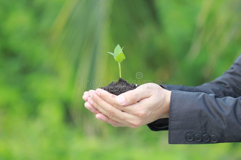 在手中拿着绿色植物的人的关闭,我们爱想法世界  库存图片