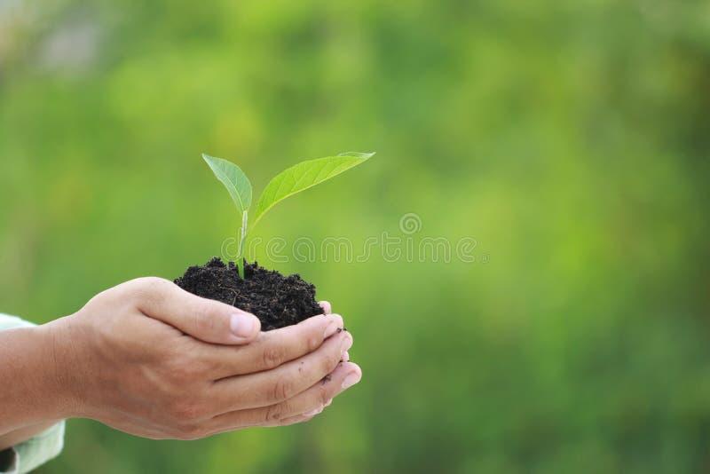 在手中拿着绿色植物的人的关闭,我们爱想法世界  库存照片
