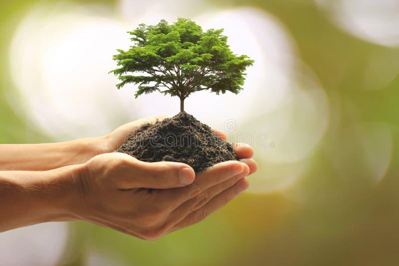在手中拿着绿色植物的人的关闭 免版税图库摄影