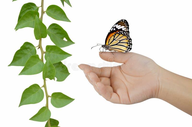 Download 在手指的蝴蝶有植物的 库存照片. 图片 包括有 颜色, 蝴蝶, 手指, 现有量, 背包, beautifuler - 30336912