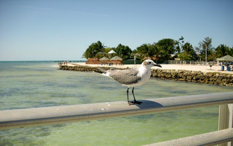 在手边栖息路轨的海鸥 免版税库存照片