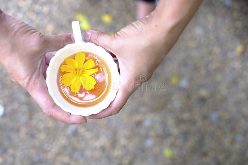 在手边被安置的热的茶杯 库存照片