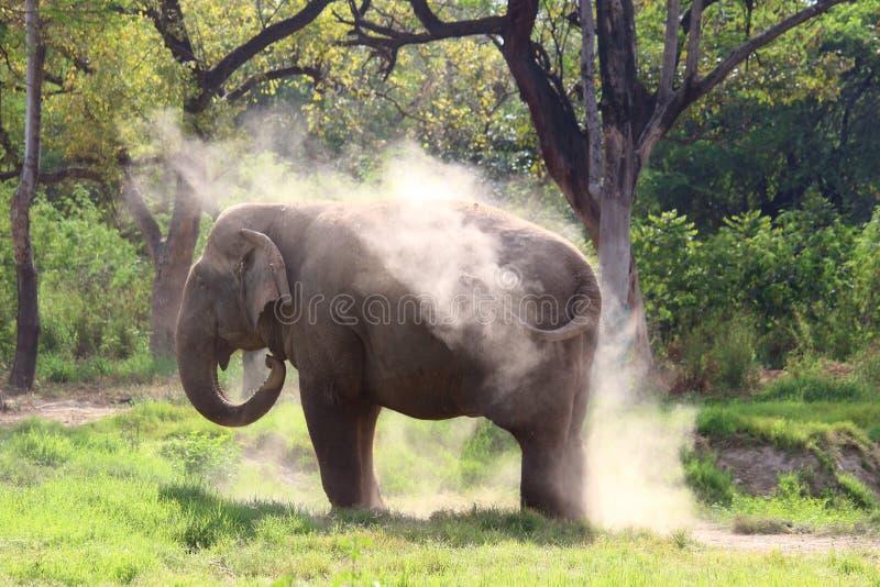 在打扫灰尘期间被察觉的大象 免版税库存照片