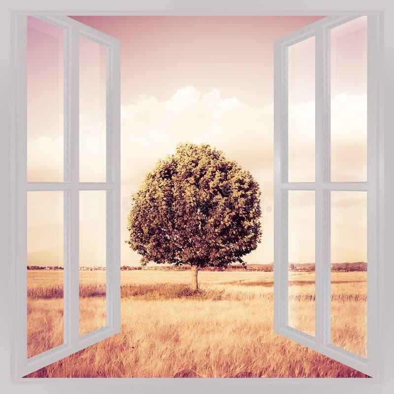 在托斯卡纳wheatfield视图的被隔绝的树从窗口-骗局 库存照片
