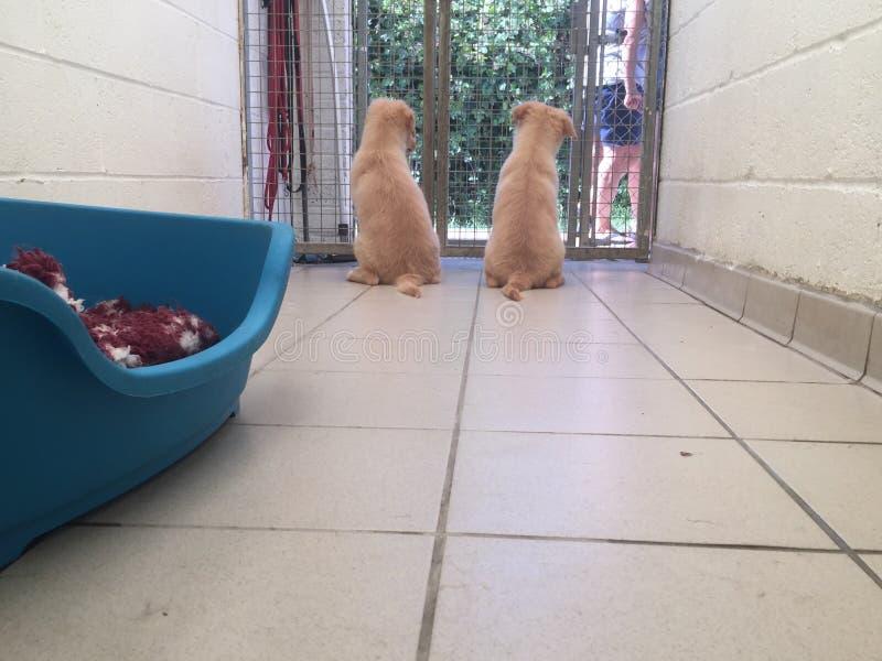 在抢救风雨棚的狗 库存照片