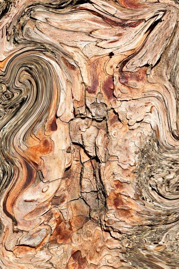 在抽象关闭的barck树颜色和纹理 免版税库存图片