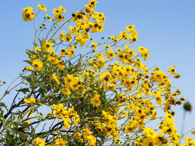 在拉古纳海岸原野公园的野花 库存照片