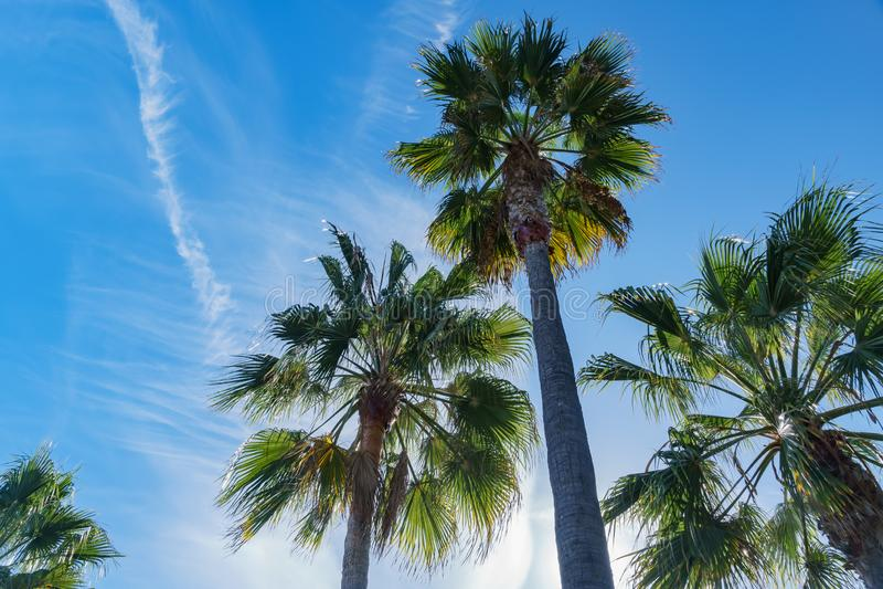 在拉古纳海滩附近查寻棕榈树 免版税库存图片