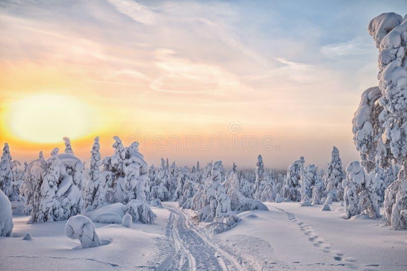 在拉普兰HDR的冬天 库存照片