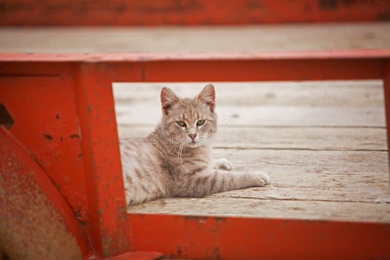 在拖车的农厂猫 免版税库存照片