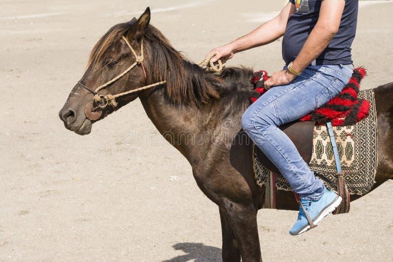 在拿着套索的一匹小马的后侧方安装的车手由righ 免版税库存图片