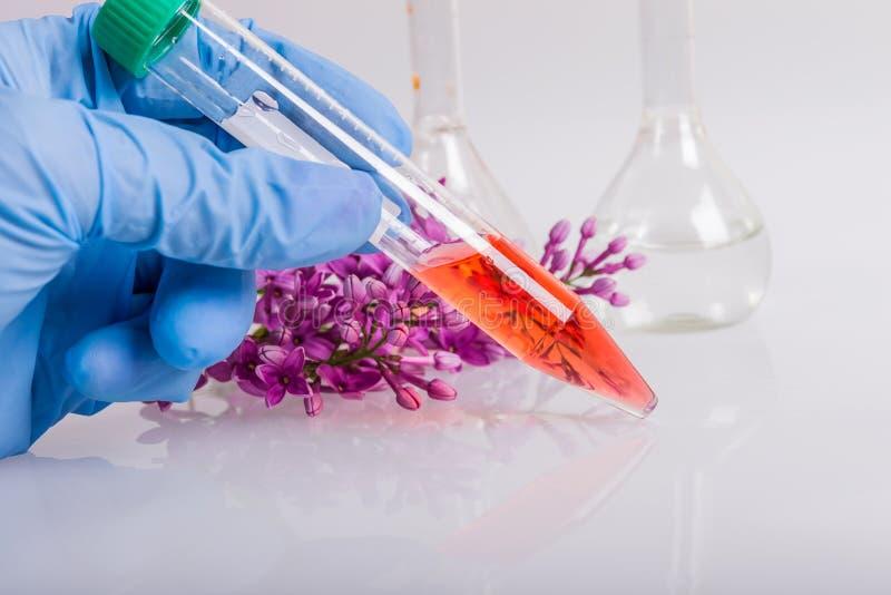 在拿着有萃取物的,工作的手套的手管在生物化学的实验室 免版税库存照片