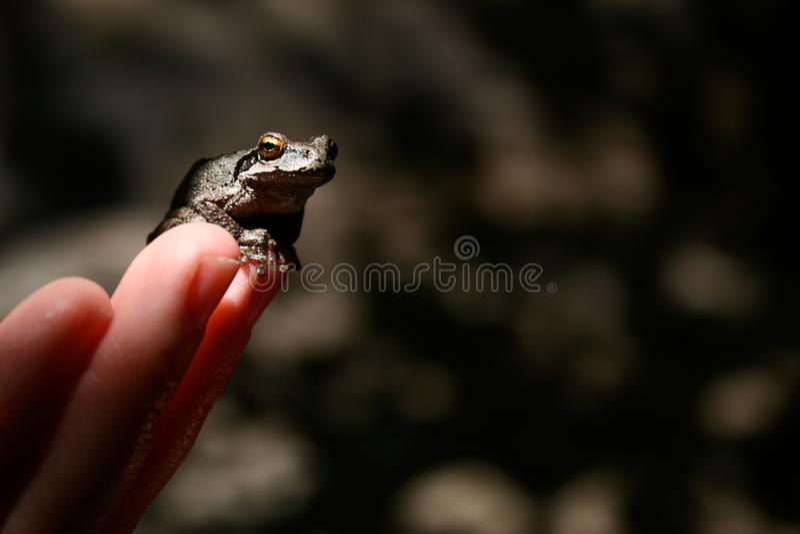 在指尖的青蛙 库存图片