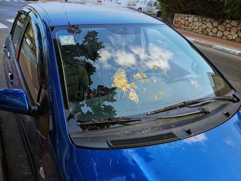 在挡风玻璃的鸟船尾 免版税库存照片