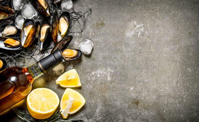 在捕鱼网的新鲜的蛤蜊 免版税库存图片