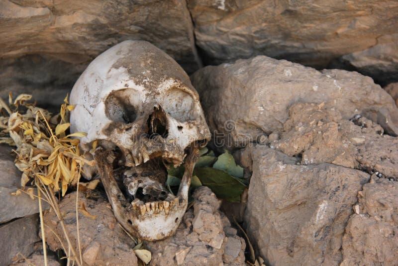 在掩埋处的人的头骨 库存照片