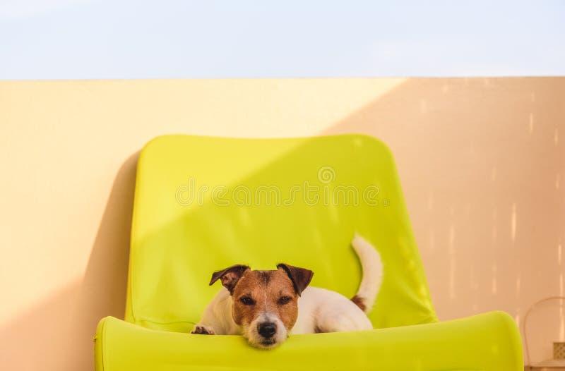 在掩藏从热的热的夏日狗在阴影在阳台 免版税库存图片
