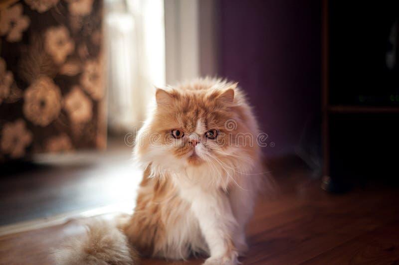 在搜索的猫 库存照片