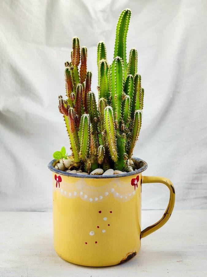 在搪瓷杯的微型仙人掌 免版税库存图片